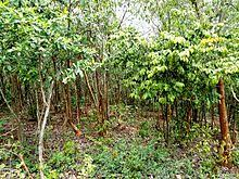 Chattisgarh Forests and Vegetation